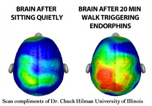 endorphins-the-affect-of-a-20-minute-walk-on-the-brain